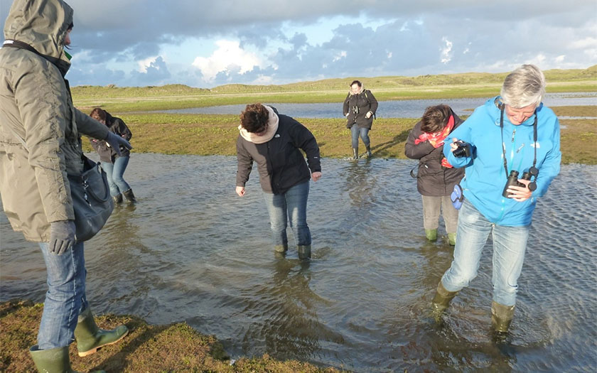 Through the salt marshes of the Slufter