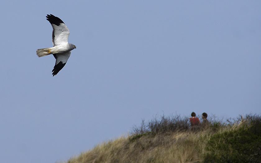 Op zoek naar (sporen van) roofvogels
