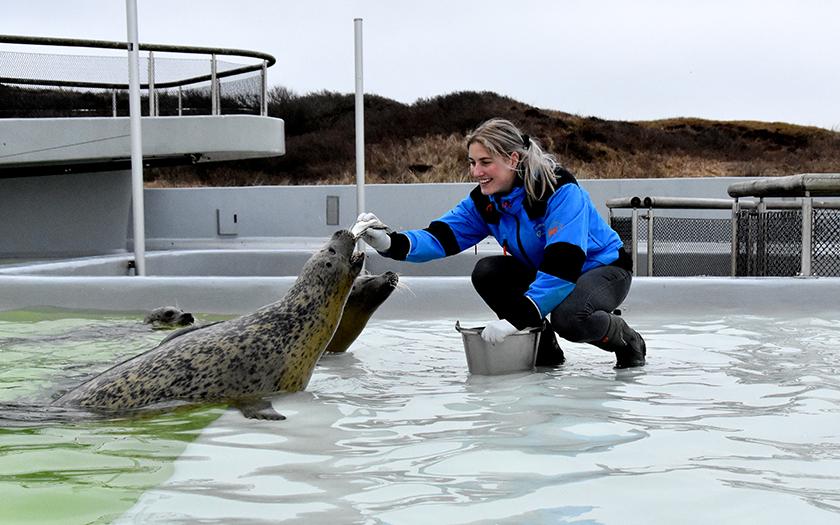 Robben füttern